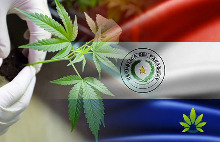 Paraguay Plans to Issue Citizens with Medical Cannabis Production Licenses