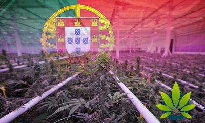 Portugal's Ideal Weather Prompts Flowr to Setup Cannabis Grow Operation Like Tilray and Aurora