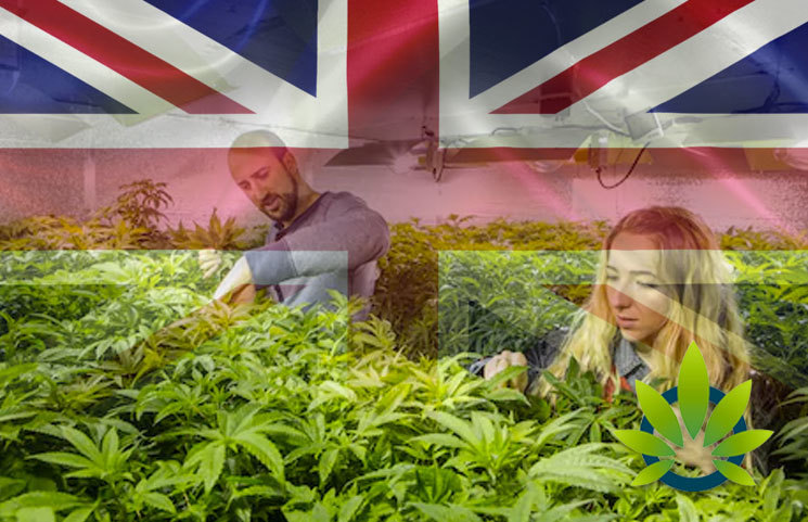 Tension Tightens for British Government to Adopt Proper Medical Cannabis Rules