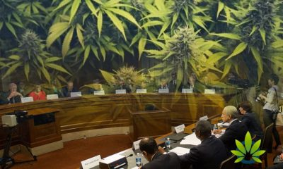 Senate-Committee-Calls-for-Enhanced-CBD-and-CBG-Cannabis-Compound-Research