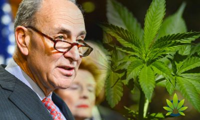 Senator Chuck Schumer Calls for Decriminalization In Response to Cannabis Banking Bill