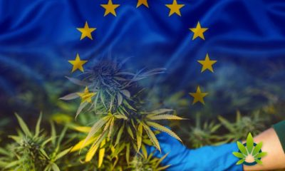 THC Potency Levels in European Cannabis Have Doubled in the Last Decade