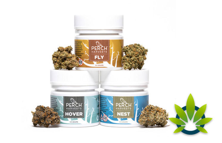 Temescal Wellness Debuts Perch Harvests, a Cannabis Flower Line Including Nest, Hover and Fly