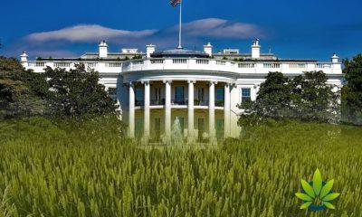 USDA Anxiousness Awaits White House Verdict for Hemp Growing Regulations