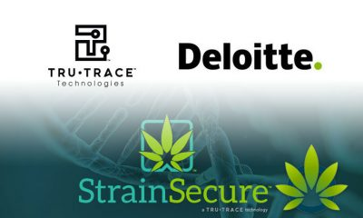 TruTrace and Deloitte Partner to Use Blockchain to Track Cannabis Quality via Its StrainSecure System