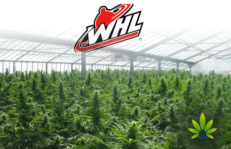 World High Life (WHL) Buys UK-based Love Hemp in a £9 Million Deal