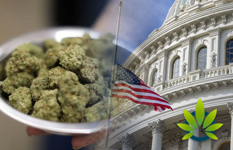 Washington, D.C. Law Prevents Government Workers from Getting Discriminated for Being MMJ Patients