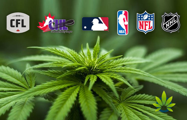Professional Athletes Voice Support for Cannabis Use, But Will Sports Leagues Advocate It?