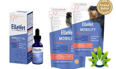 ElleVet Sciences CBD: Hemp CBD Oil & Chews for Dogs and Cats Pets