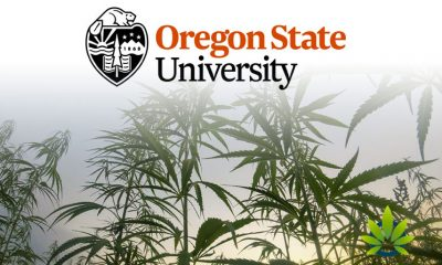 1-Million-Private-Donation-Sent-to-Hemp-Research-Center-for-Oregon-State-University