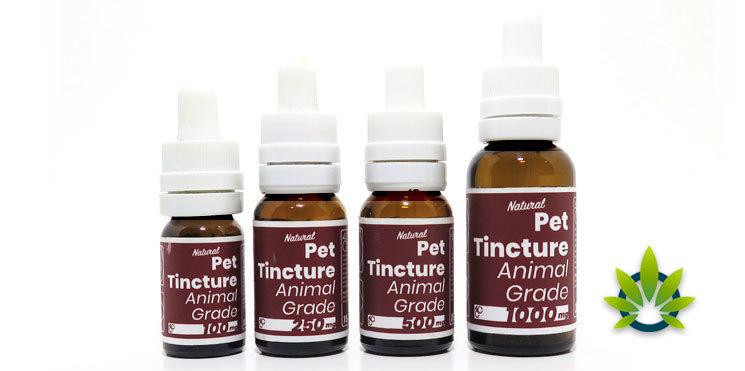 4 corners cannabis pet tincture