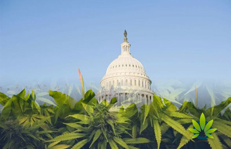 """Activists Carry A """"Giant"""" Marijuana Joint Outside Congress Protesting The SAFE Banking Act"""