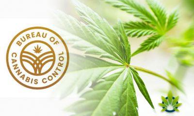 Bureau of Cannabis Control Announces Cannabis Meeting in Burlingame