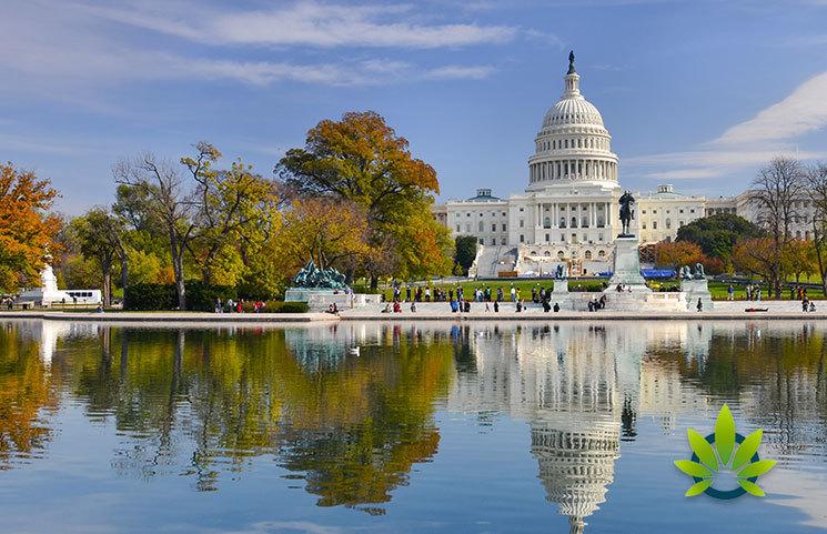 CBD Legality in Washington