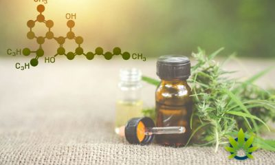 CBD-Litigation-Increases
