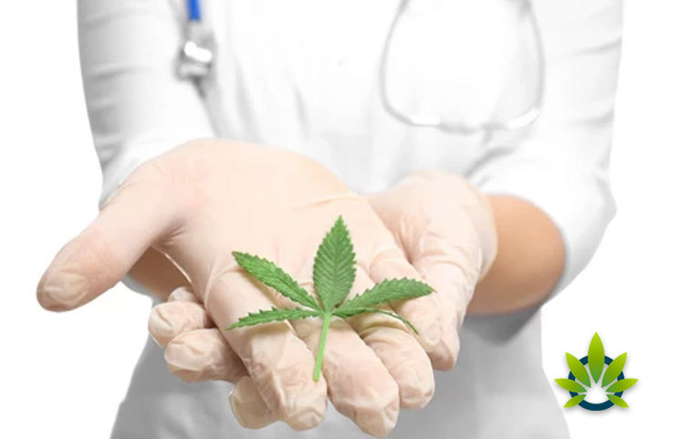 New Study: Marijuana's THC and CBD Naturally Balance Out the Reaction in the Body