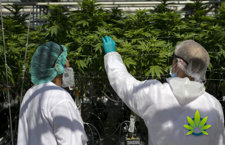 CannTrust Forced to Lay off a Quarter of its Staff Amidst Temporary License Freeze