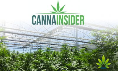 New CannaInsider CBD Transparency Badge Program Rewards Company Transparency