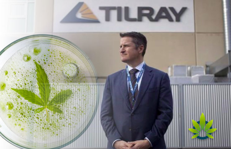 Cannabis-Drinks-on-the-Rise-But-More-Research-is-Needed-Before-Tilray-Inc-Anheuser-Busch-InBev-Launch
