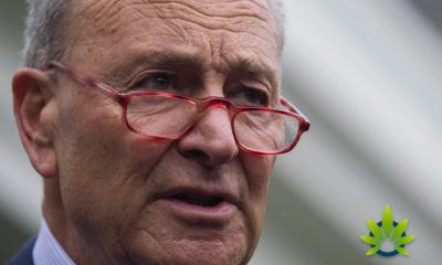 "Chuck Schumer Urges FDA for CBD Guidelines and to Do ""Its Job in a Timely Manner"""