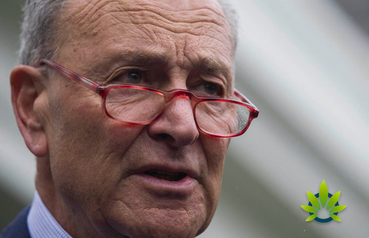 """Chuck Schumer Urges FDA for CBD Guidelines and to Do """"Its Job in a Timely Manner"""""""