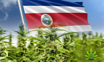 Costa Rican Ministry of Health Issues First CBD Oil Registry
