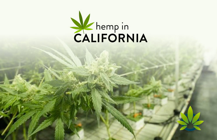 Counties and Cities in California Stay Split on Production of Hemp and Marijuana