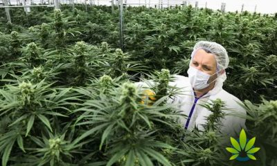 Despite-Plenty-of-Support-for-Cannabis-Legalization-Montana-Has-a-Long-Way-to-Go