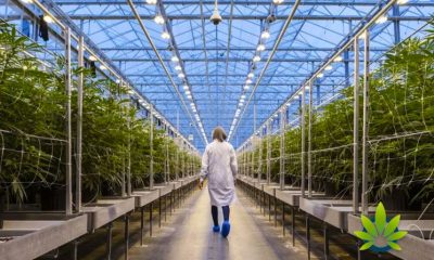 Expected Job Layoffs at Hexo Will Not Impact Belleville Cannabis Operation