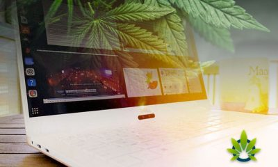 Forbes: Cannabis Stocks Will Tank Like Cryptocurrency Market Did