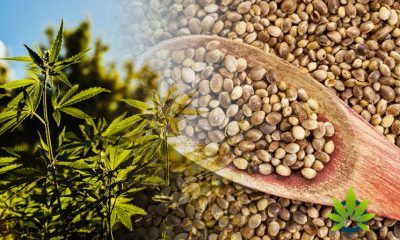Hemp Plant and Seed Import Outlined with New Regulations by USDA