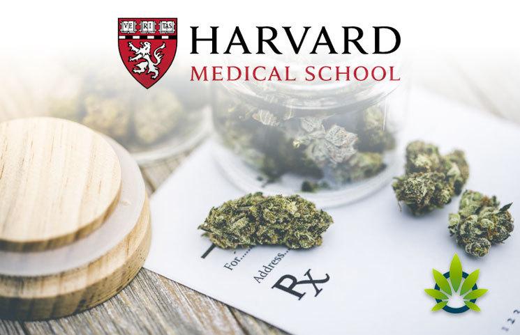 Jamaica Sparks a Cannabis Collaboration with Harvard Medical Cannabis Institute