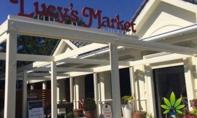 Lucys-Market-Ventures-into-CBD-Industry-via-Its-St-Lucille-CBD-Signature-Brand