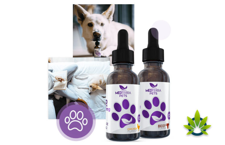 Medterra-CBD-Partners-with-Pet-Care-Organizations