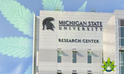 Michigan State University Researchers Seek Marijuana Industry Guidance for New Study
