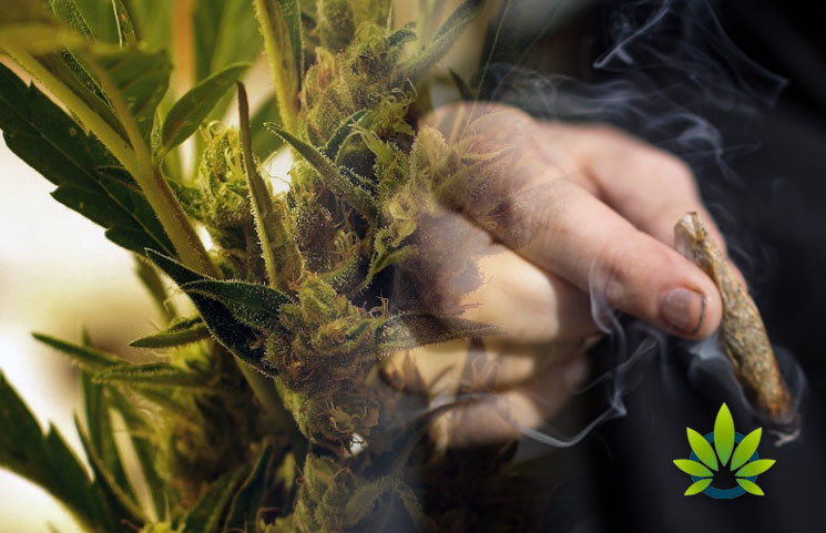 New-Study-on-Cannabis-in-the-Canadian-Workplace