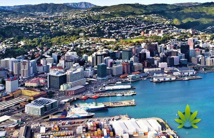 New-Zealand-CBD-Shortage
