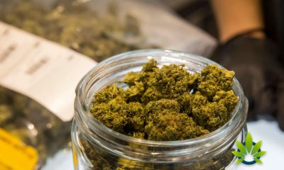 Patient-Access-to-Medical-Marijuana-Expands-in-Delaware