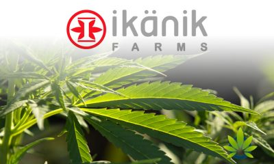 Pideka-Acquisition-by-Ikanik-Farms-Will-Crush-The-Competition-According-to-CEO
