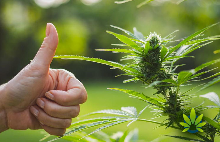 Poll-Shows-That-Majority-Of-New-York-Residents-Support-Legalization-of-Cannabis