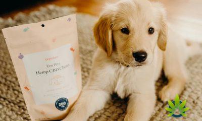Populum Releases New CBD Pet Treat, Zen Pets Hemp CBD Chews
