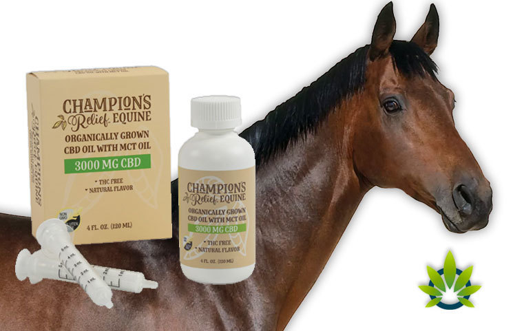 Rover's Pet Debuts New Horse-Explicit Line, Champion's Relief EQUINE CBD Brand