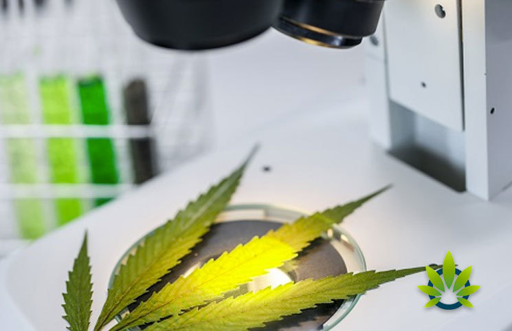 Sante-Laboratories-Become-the-First-Hemp-CBD-Testing-Laboratory-in-Texas