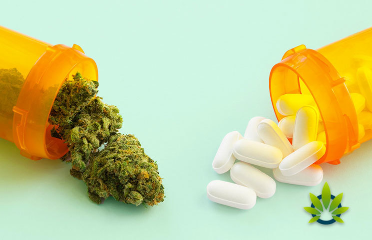 Study-on-Medical-Cannabis-and-Opioid-Reduction