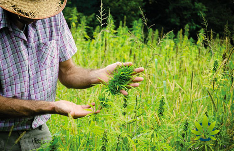 The-Power-of-Hemp-Literally