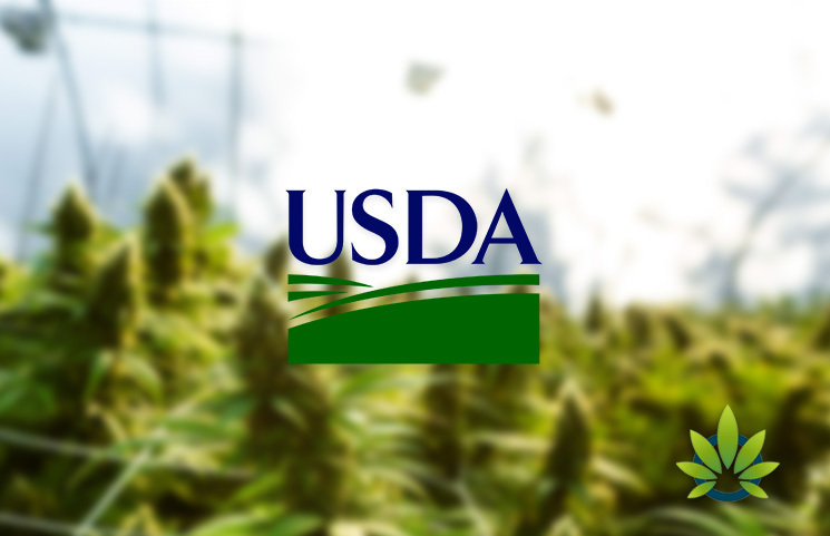 USDA: Consumers Can Expect Hemp Regulations Within the Next Month