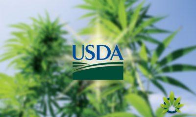USDA to Spend Half a Million on Hemp Cross-Pollination Research