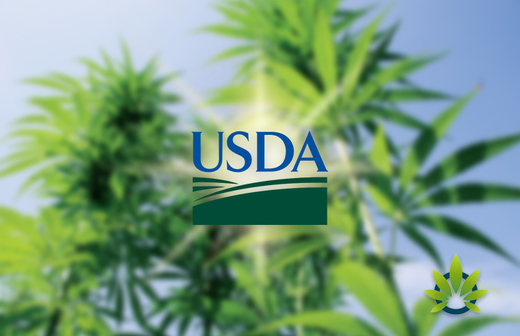 USDA to Spend Half a Million on Hemp Cross-Pollination Research