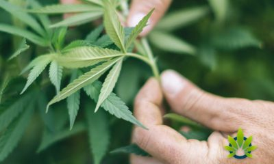 USDAs-Newly-Proposed-Hemp-Rules-Signed-by-White-House
