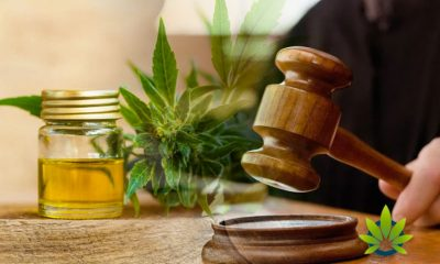 Increase in CBD Class Actions